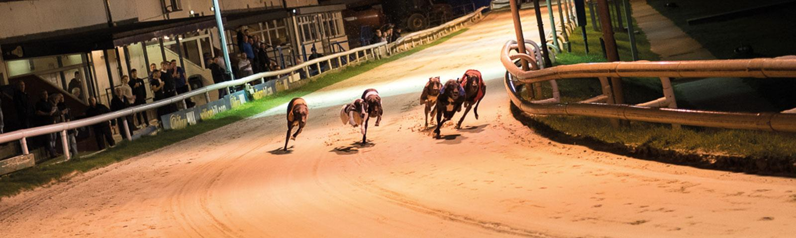Dogs racing on greyhound track