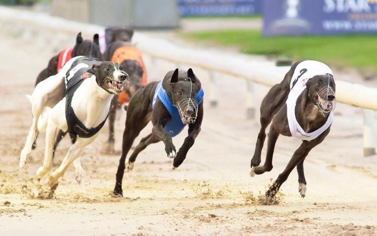 ARC announces the acquisition of Nottingham Greyhound Stadium